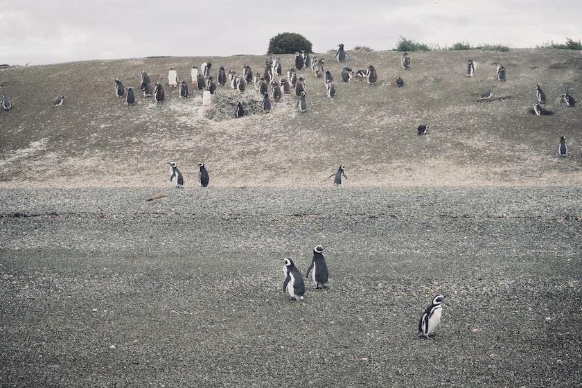 Zeilend door het Beaglekanaal op zoek naar pinguïns en zeehonden