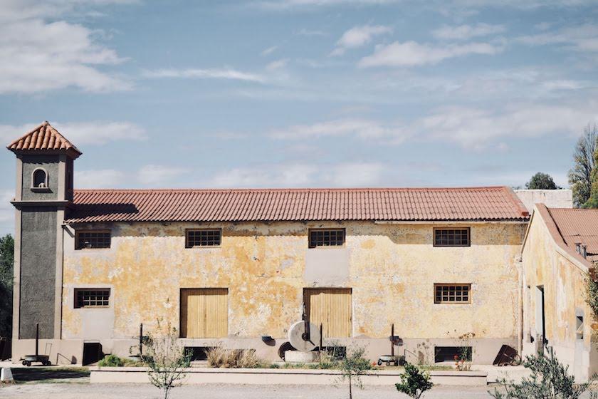 Wijnregio Mendoza: olijfgaard